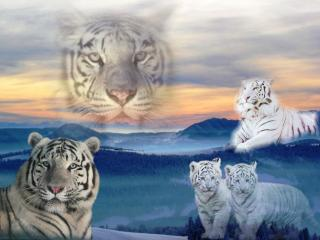 «Влюбленные в тигров» соберутся на Воробьевых горах
